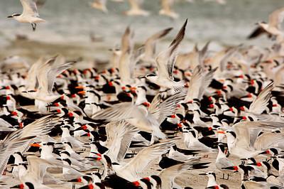 Birds 2745 a