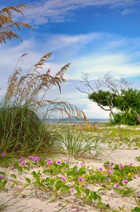 Beach 3157 a