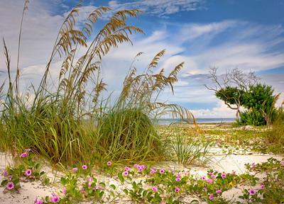 Beach 3169 a